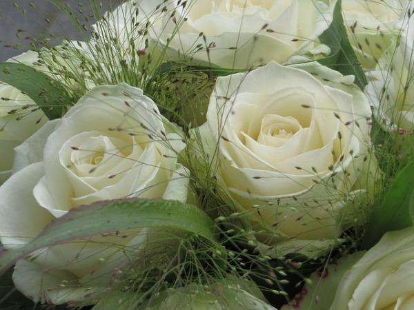 roses-414389_640