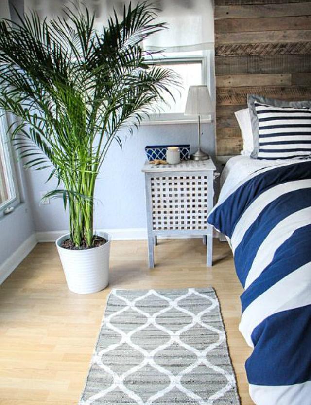 10-roślin-doniczkowych-które-oczyszczą-powietrze-w-Twoim-domu-7jpg